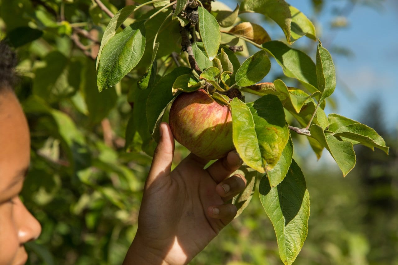 Apple Dave's Orchards – UPICK