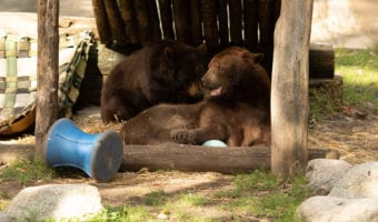 Bear Mountain Trailside Museums and Zoo