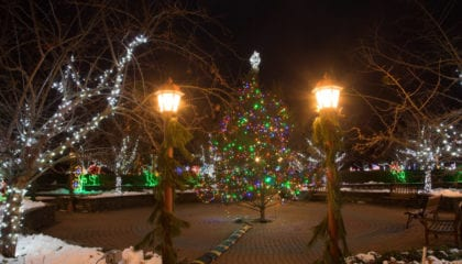 Christmas at the Arboretum