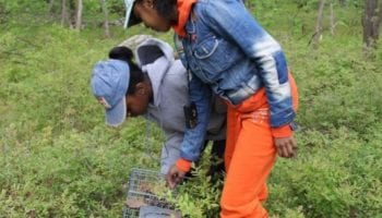 Mammals: Trapping and Tracking Summer Course