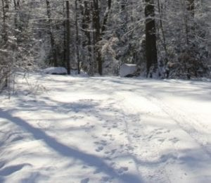 The Forest in Winter: Winter Hiking Saftey